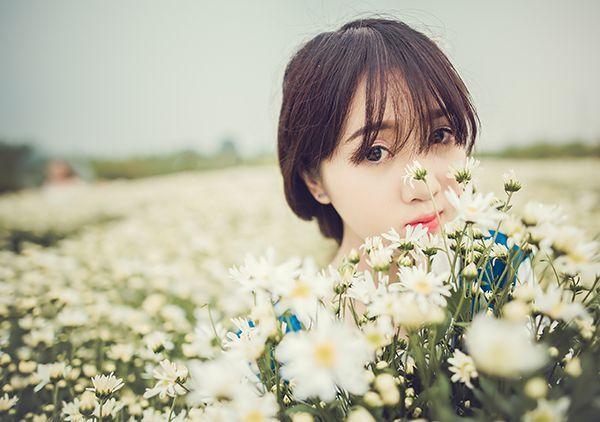 Cúc Họa Mi, Hoa Cúc, Làng Hoa, Thảo Nguyên Hoa, Làng hoa Tây Tựu, Cánh đồng hoa, bãi đá Sông Hồng, Làng hoa Nhật Tân, Hà Nội, Địa điểm chụp ảnh, tạo dáng, chụp ảnh