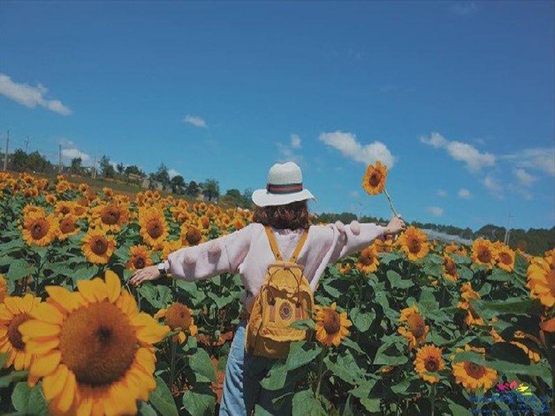 Cánh đồng hoa Đà Lạt ngập tràn hoa hướng dương - Dichvuhay.vn