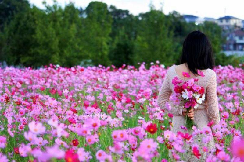 Địa điểm chụp ảnh hoa, địa điểm chụp ảnh, Hoa, Hoa Cải Trắng, Mộc Châu, Vườn hoa Bách Nhật, Cúc Họa Mi, Hoa Tam giác mạch, Hoa Hướng Dương, Hoa Dã Quỳ, Hoa Đà Lạt, Hoa Cúc Dại, Dulichso.vn